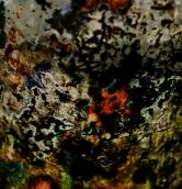 Mould Scape 1, Digital Print