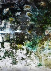 Mould Scape 12, Digital Print