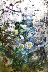 Mould Scape 9, Digital Print