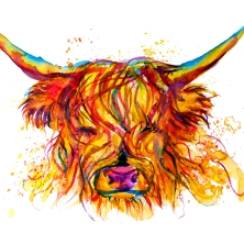highland cow 50