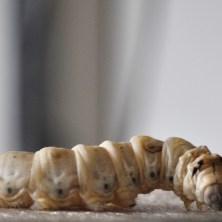 worm spinning flat
