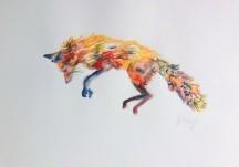 fox jumping